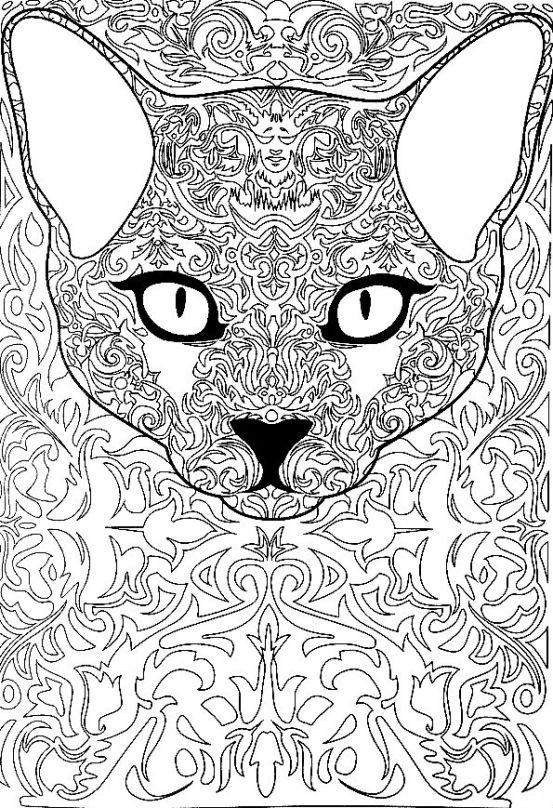 Раскраска кошачий взгляд