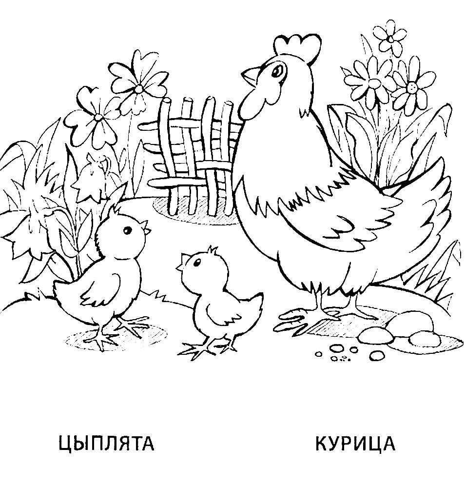 Раскраска курица и цыплята
