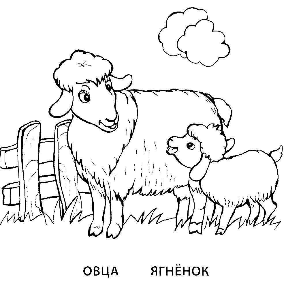 Раскраска овца и ягненок