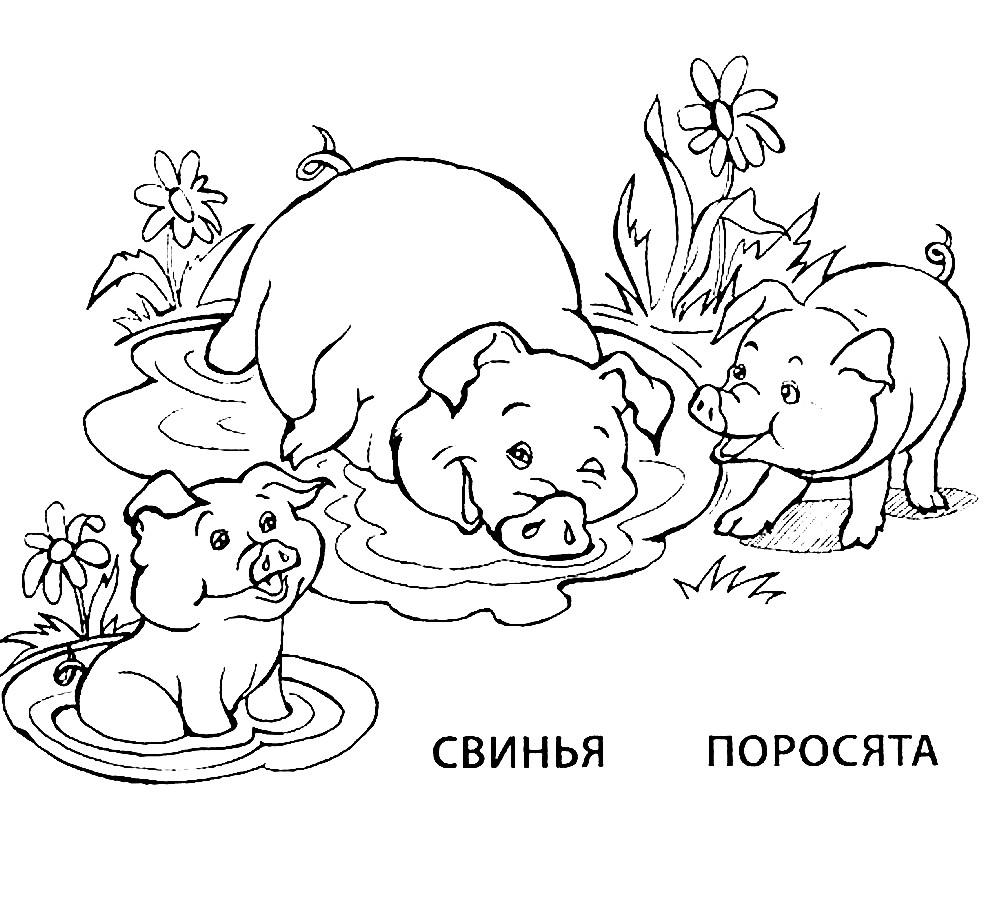 Раскраска свинья и поросенок