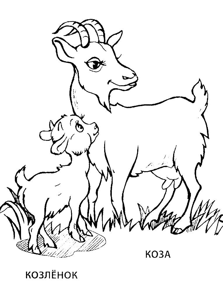 Раскраска коза и козленок