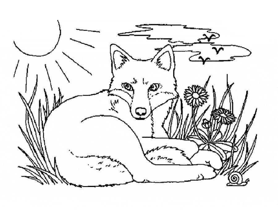 Раскраска степная лиса