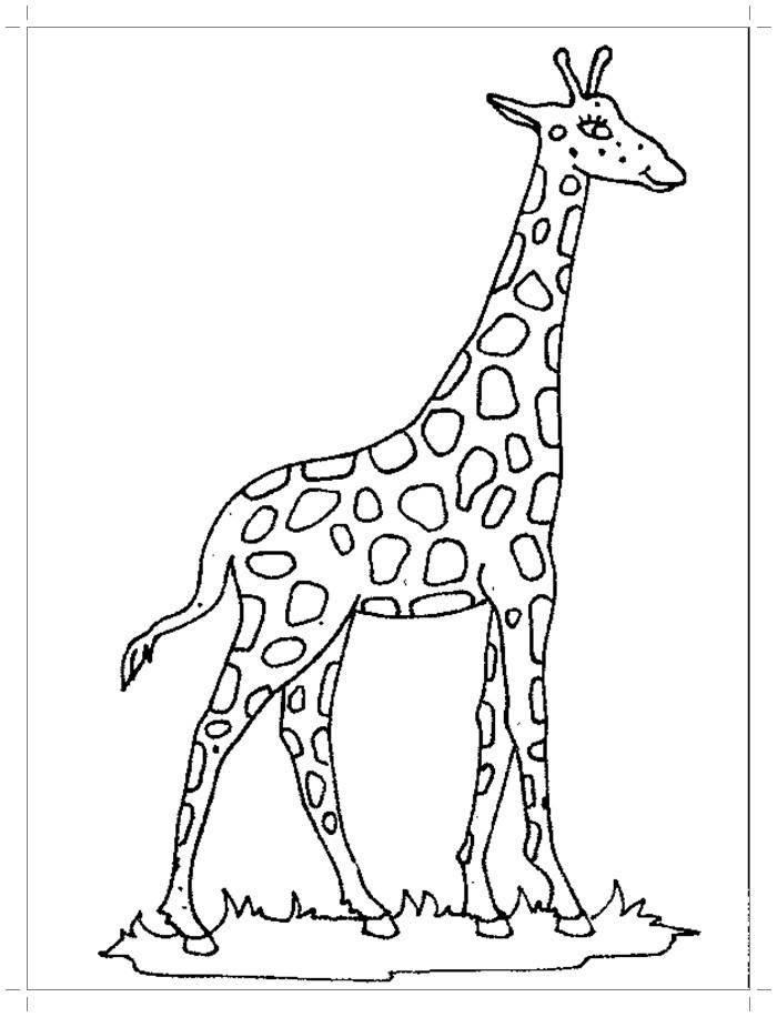 Раскраска красивый жираф