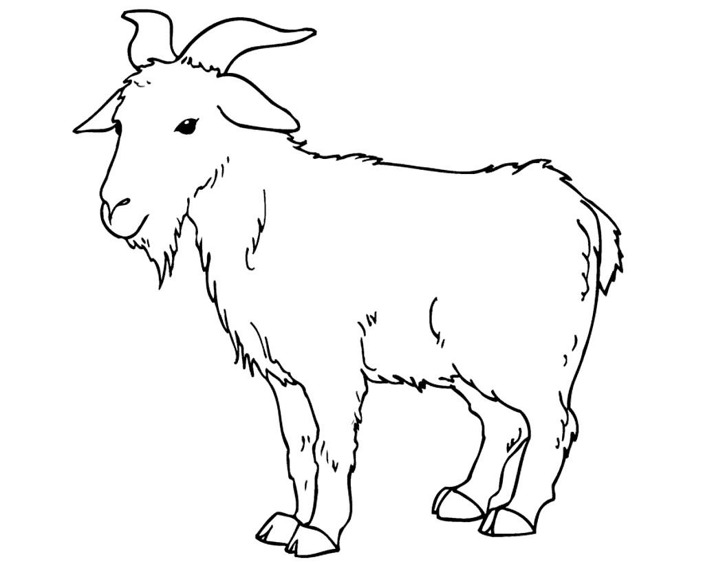 Раскраска горный козёл
