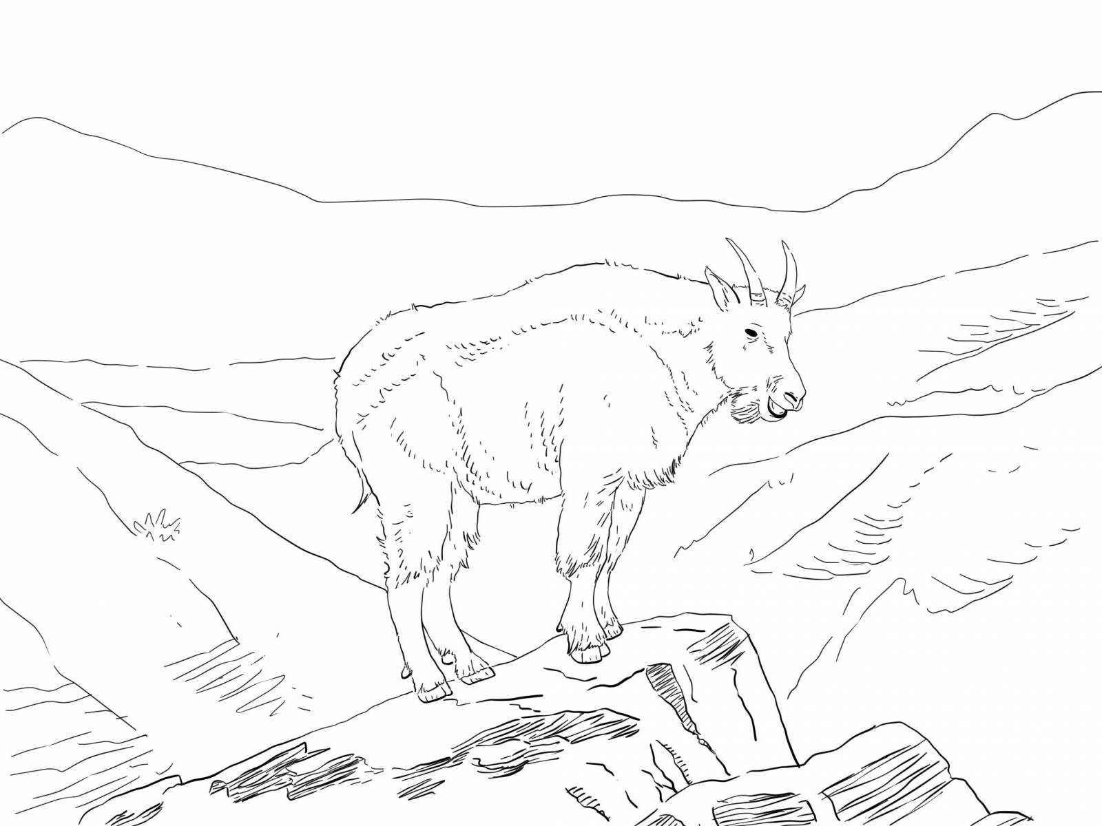Раскраска козел пасется в горах