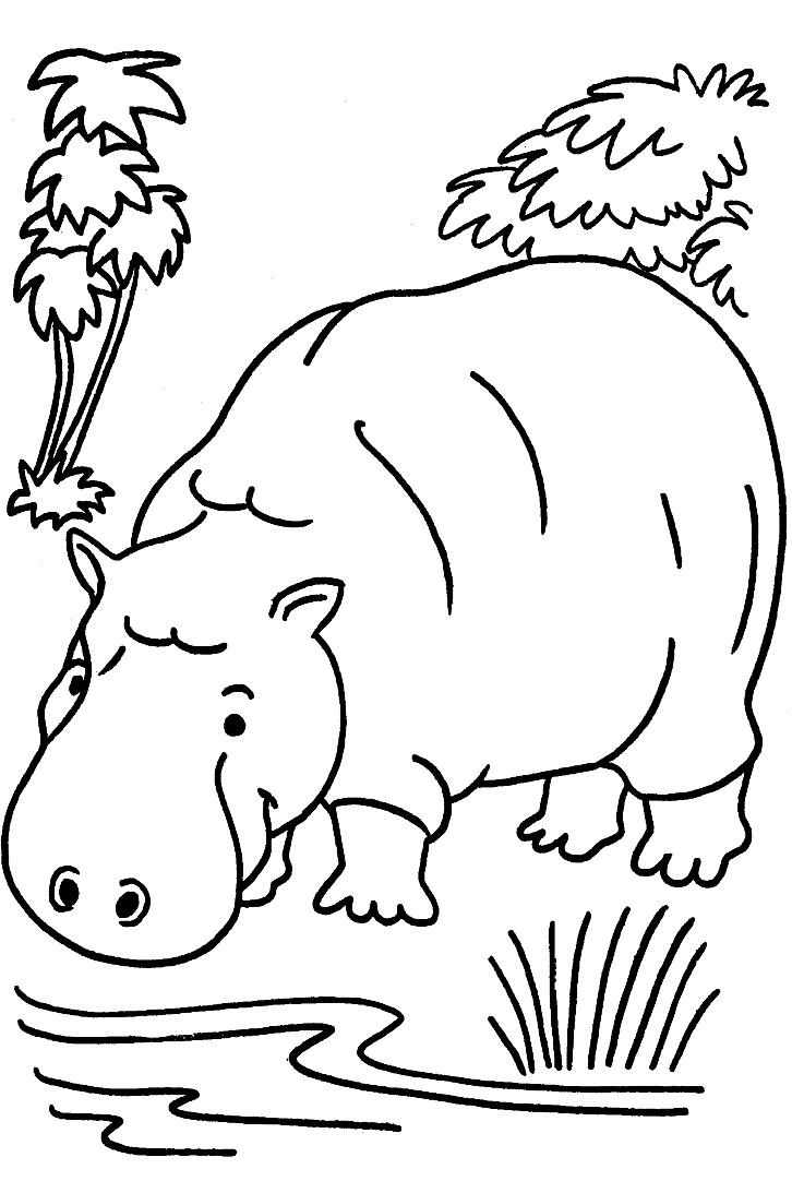 Раскраска большой бегемот