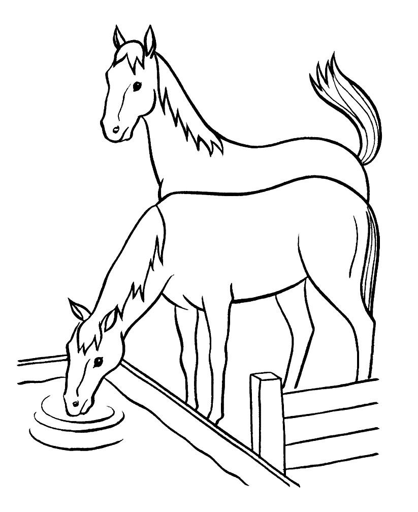 Раскраска лошади