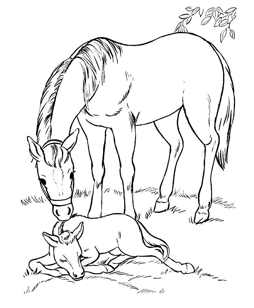 Раскраска жеребенок и лошадь