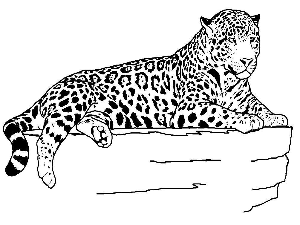Раскраска ягуар на камне