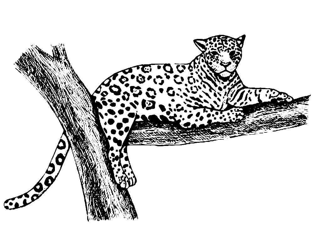 Раскраска ягуар на дереве