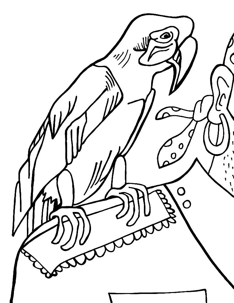 Раскраска любимый попугай настоящего пирата
