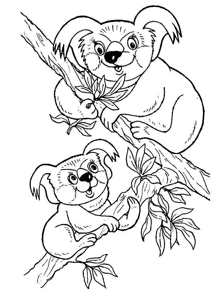 Раскраска коалы