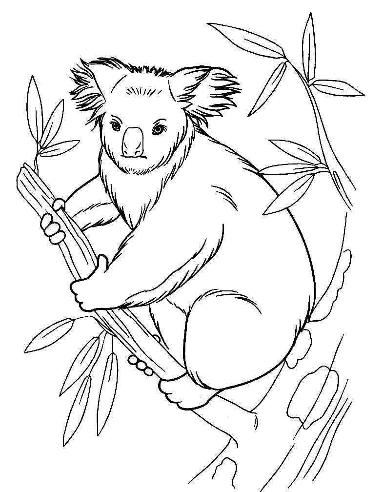 Раскраска коала на ветке