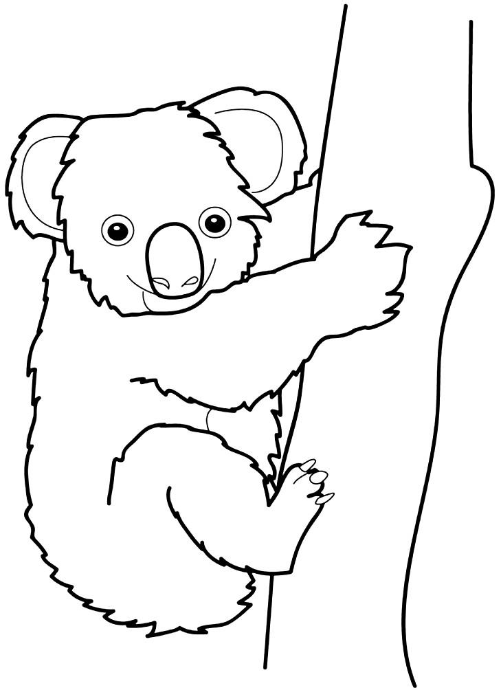 Раскраска коала на дереве