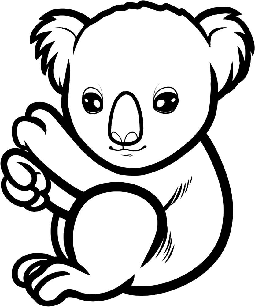 Раскраска коала для детей