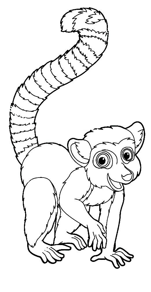 Раскраска лемур для малышей