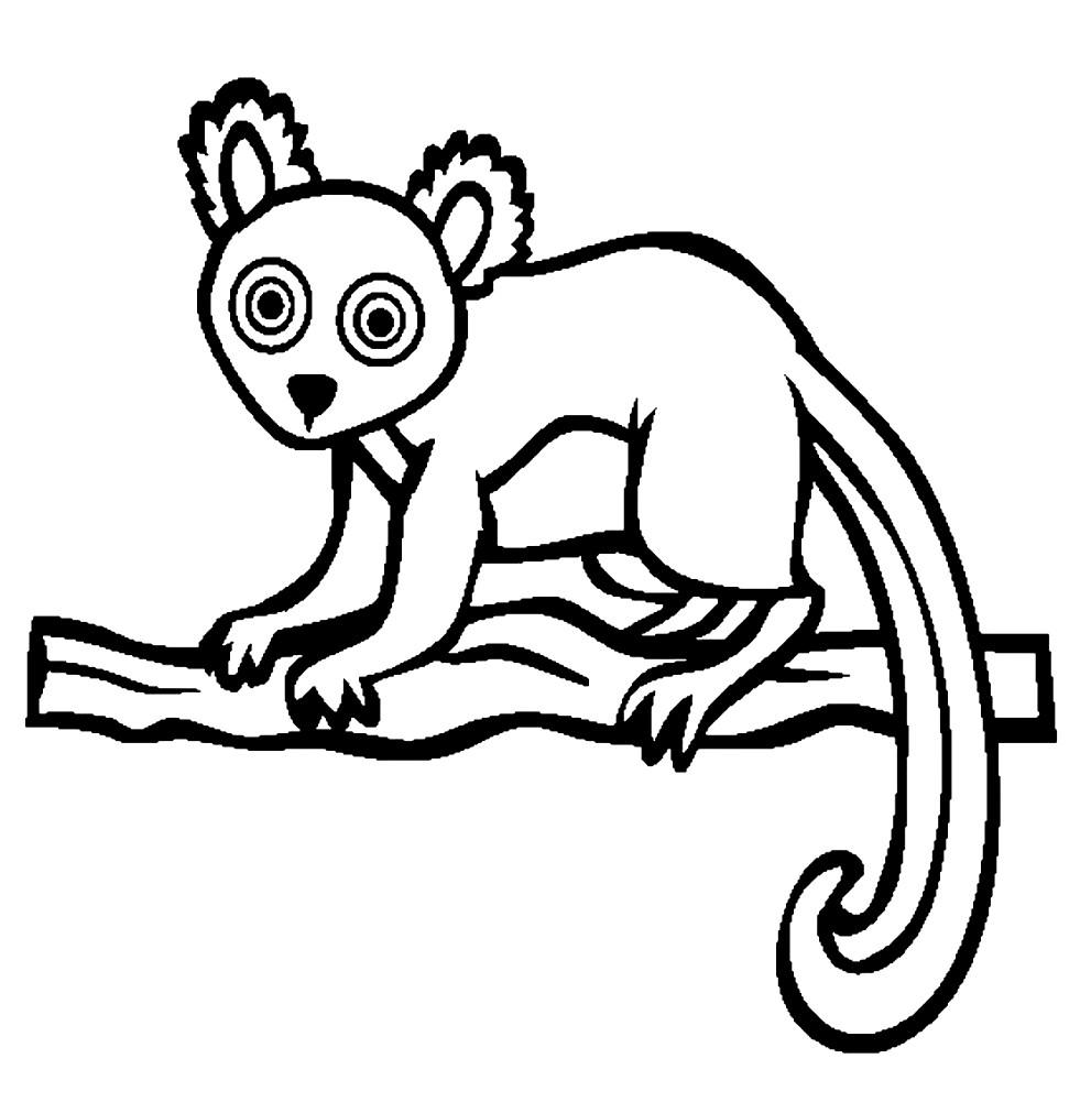Раскраска лемур на дереве