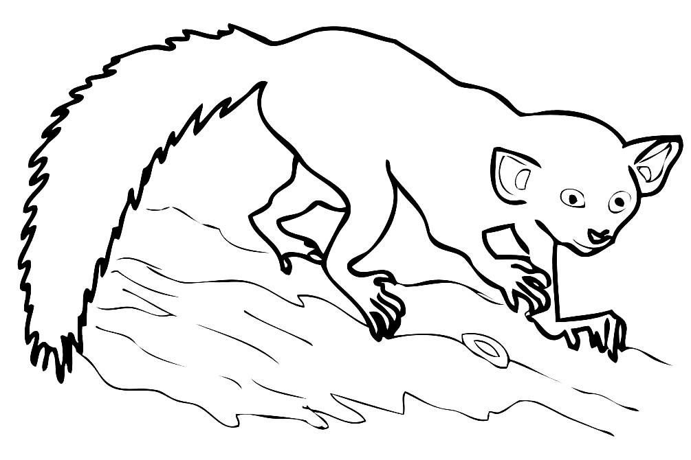 Раскраска lemur
