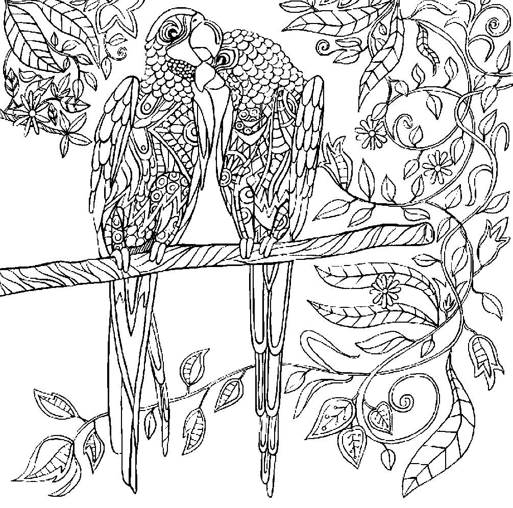 Раскраска антистресс попугаи | Раскраски для детей ...