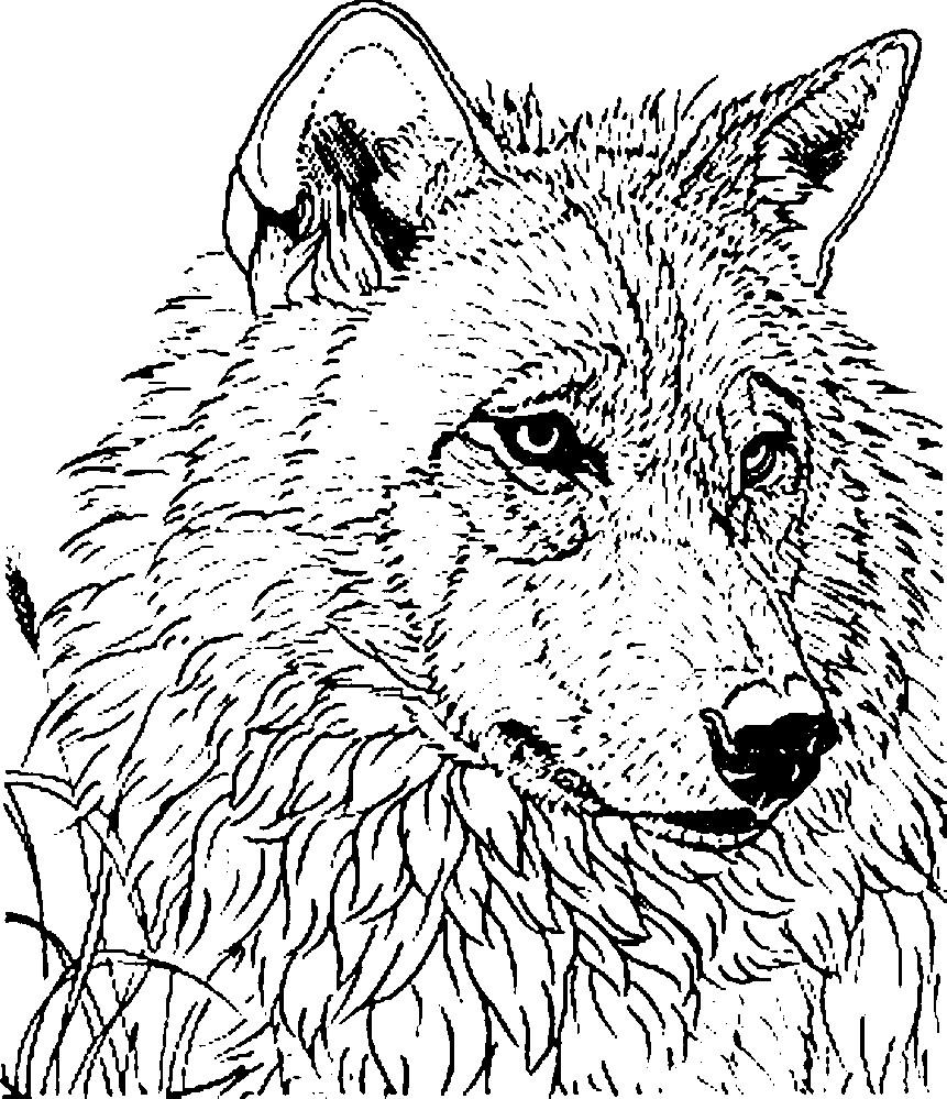 Раскраска антистресс волчья голова