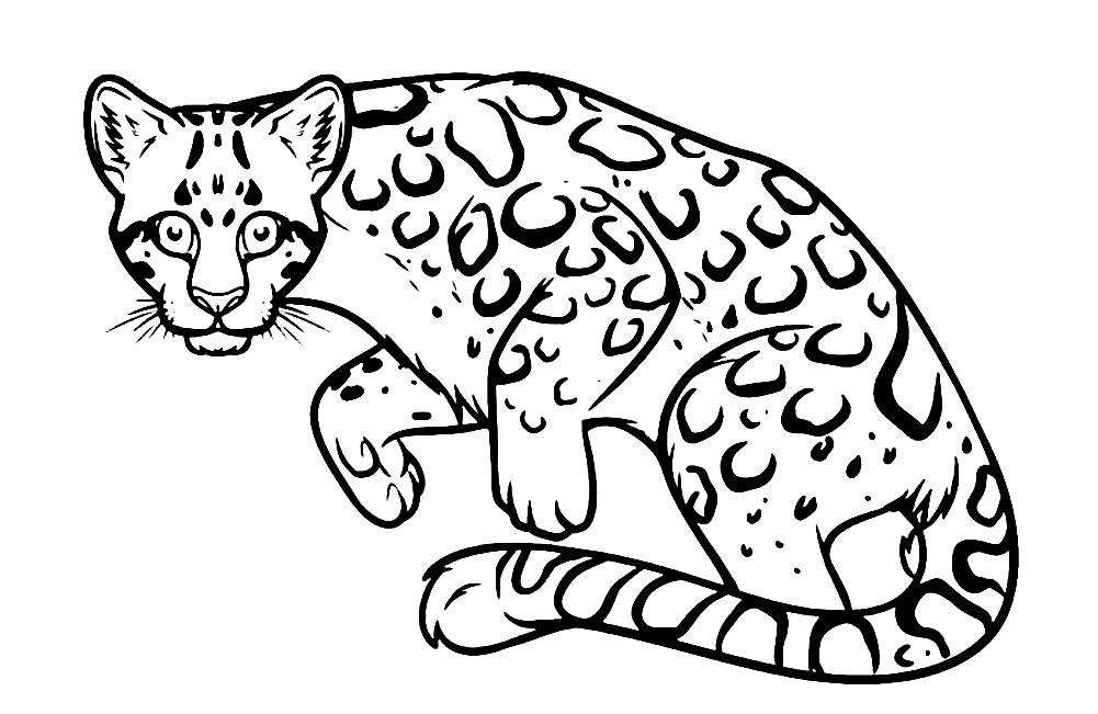 Раскраска леопард на охоте