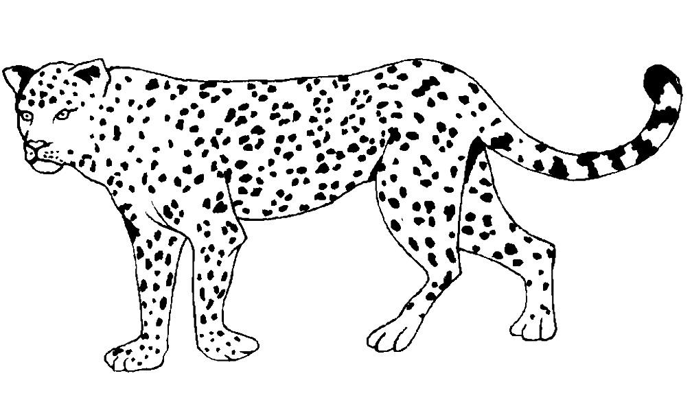 Раскраска леопард для детей