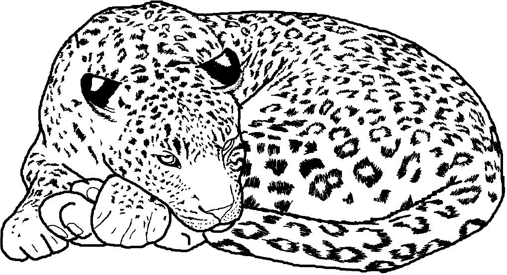 Раскраска леопард отдыхает