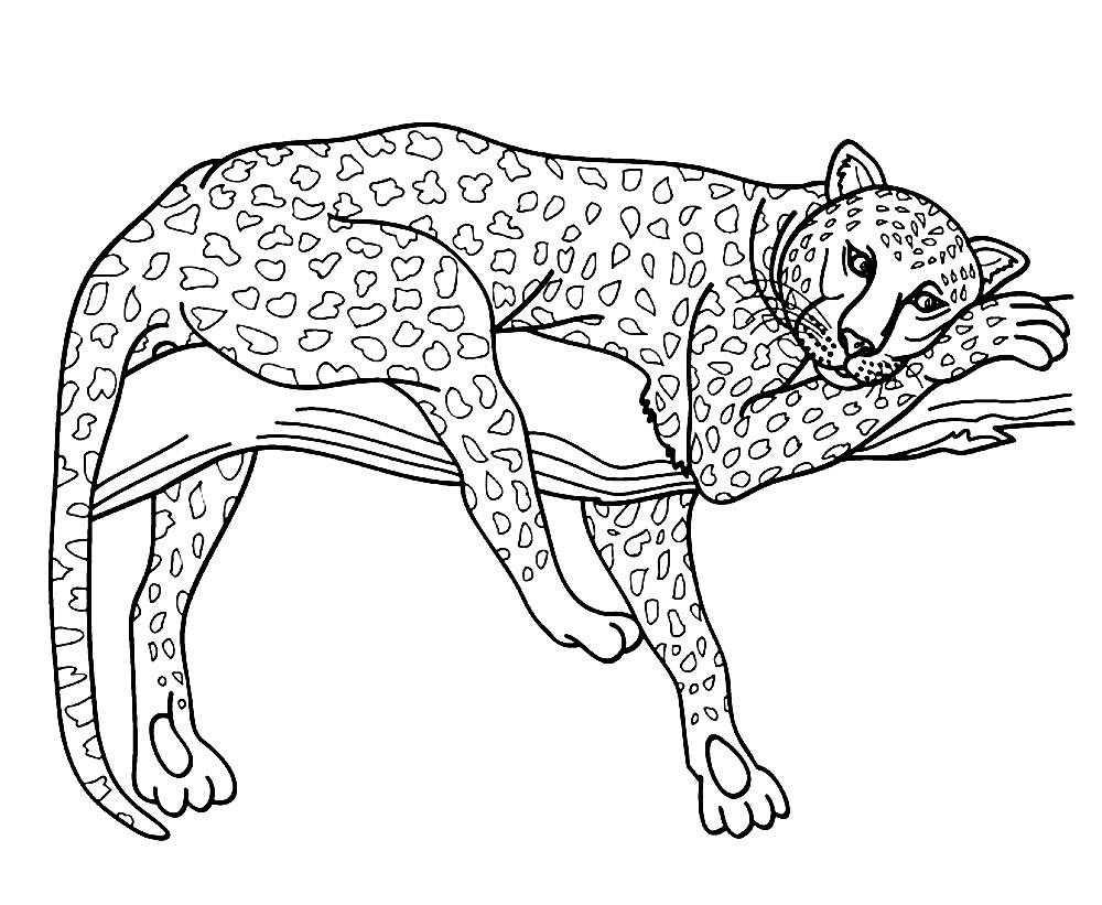 Раскраска леопард на дереве