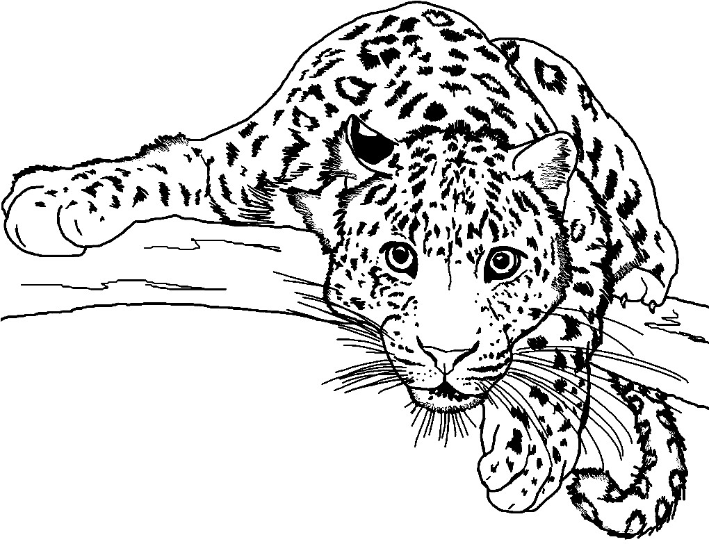 Раскраска взгляд леопарда