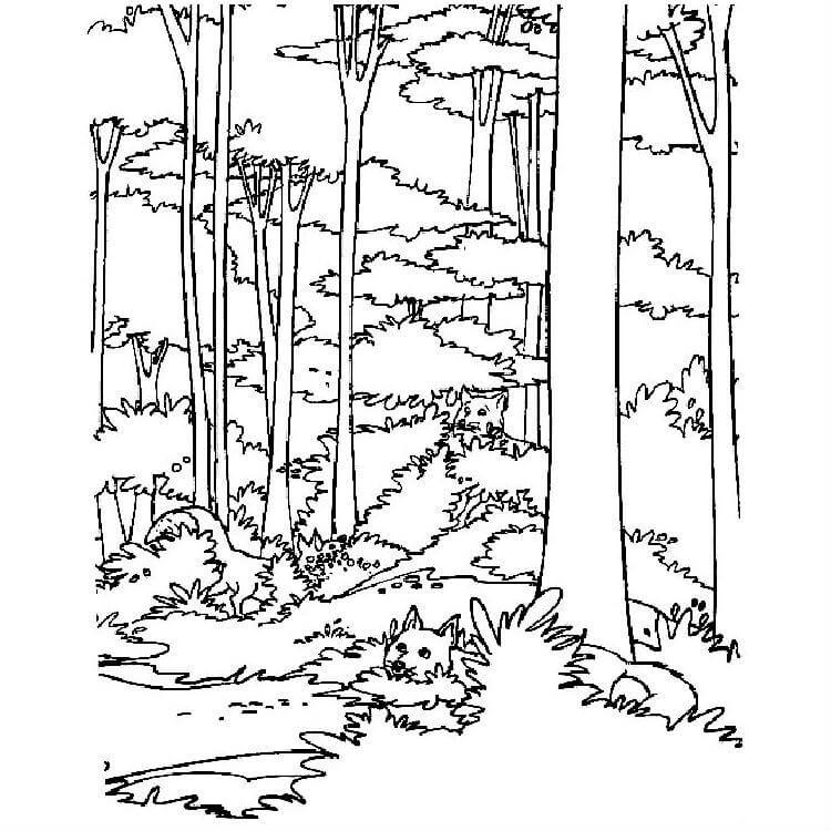 Раскраска дикий лес