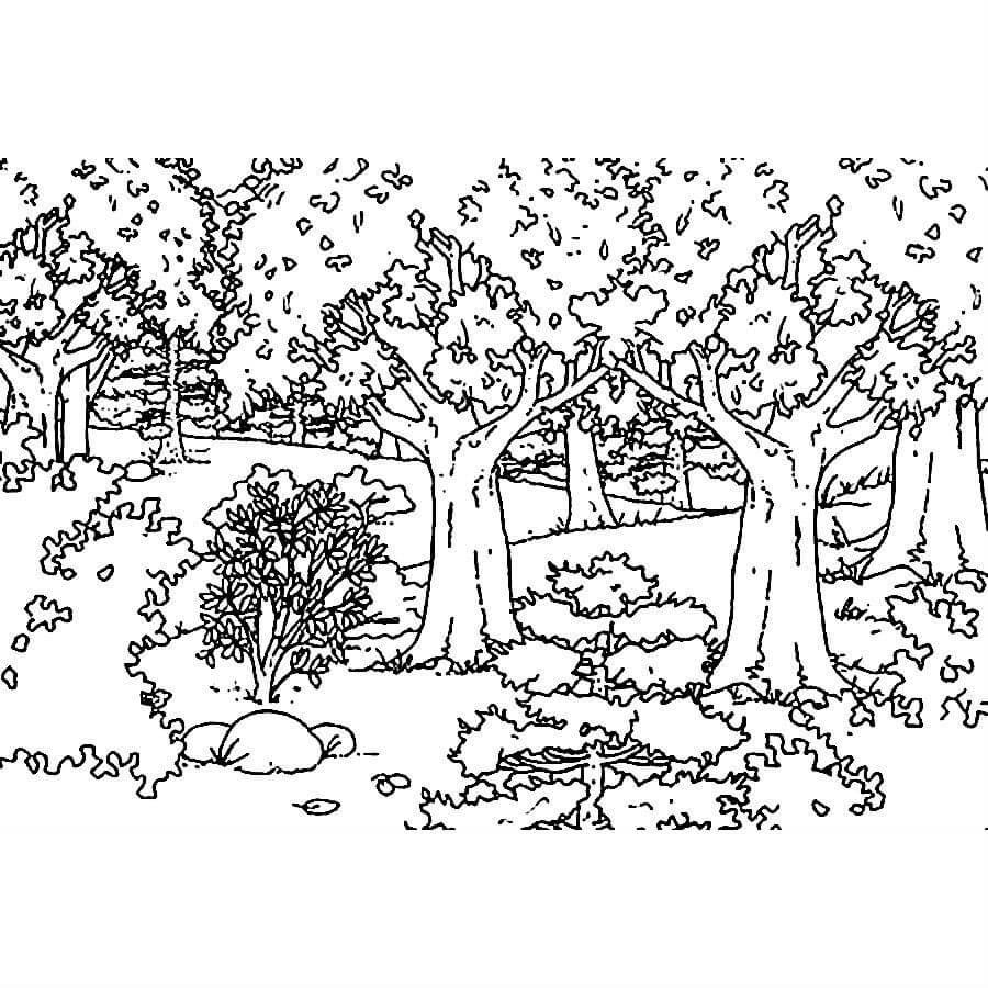Раскраска лесной пейзаж