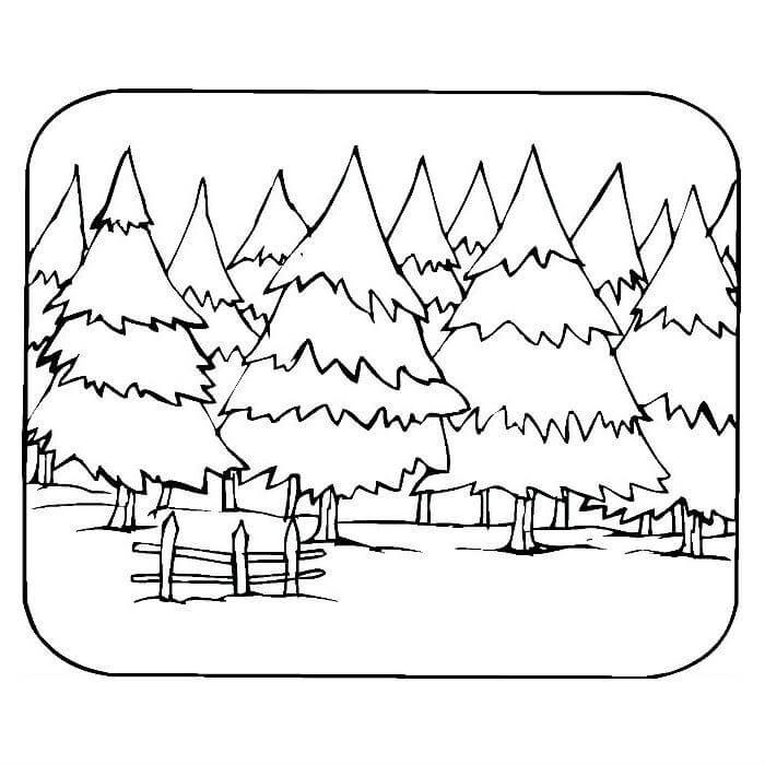 Раскраска хвойный лес