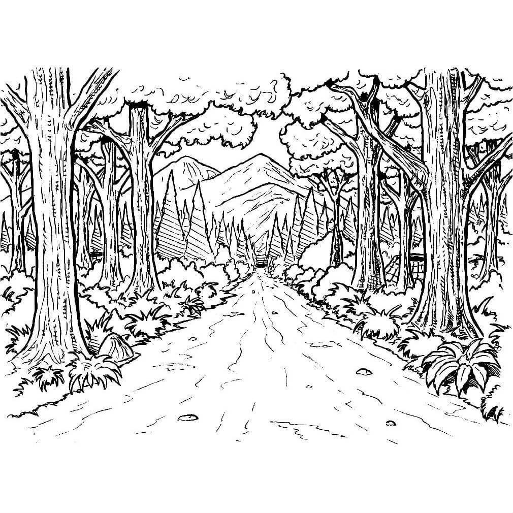 Раскраска зачарованный лес