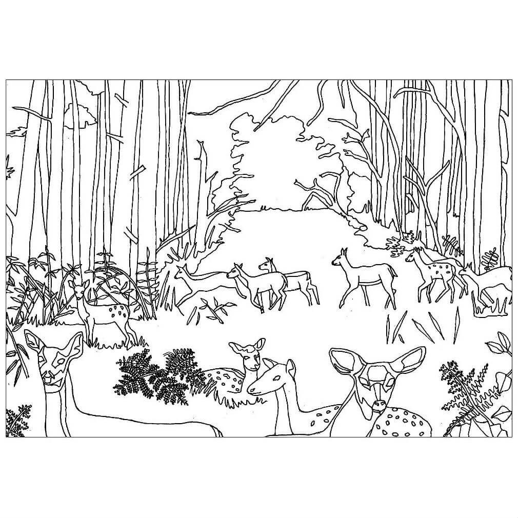 Раскраска звери в лесу