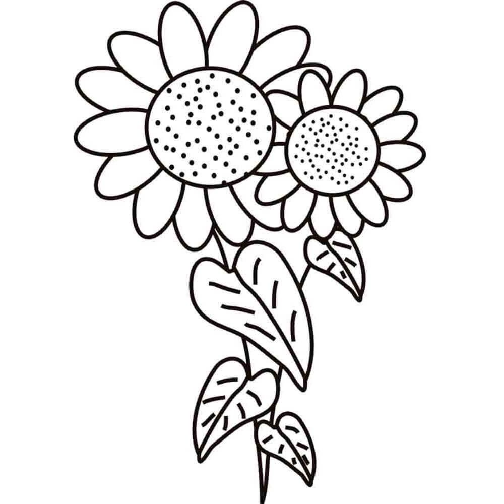 Раскраска растение подсолнух