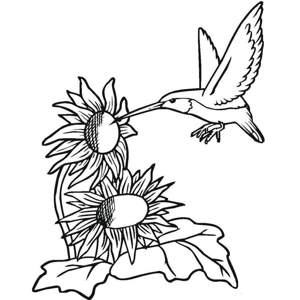 Раскраска подсолнухи с птичкой