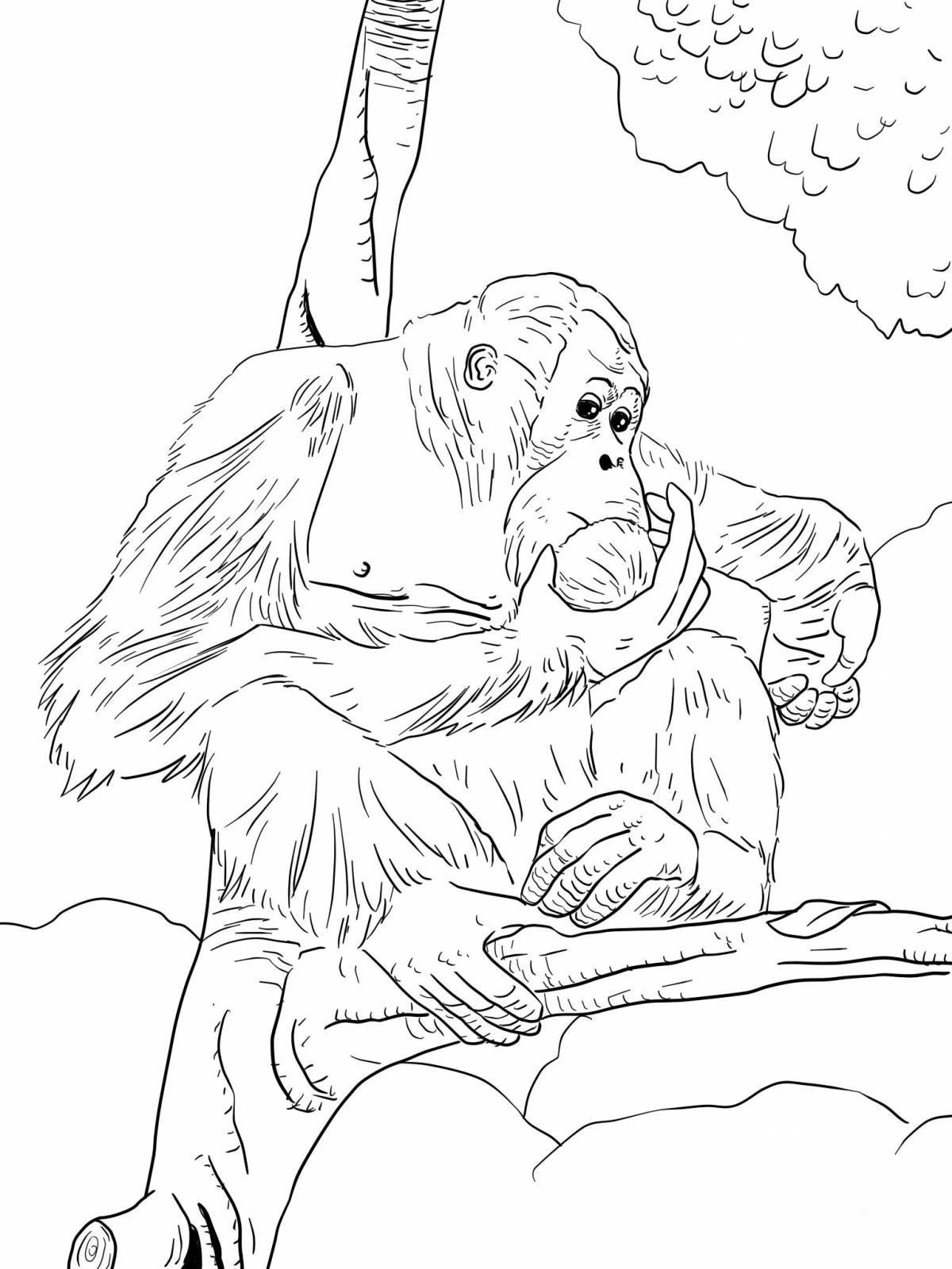 Раскраска Калимантанский орангутан