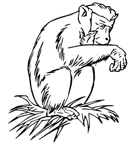 Раскраска шимпанзе