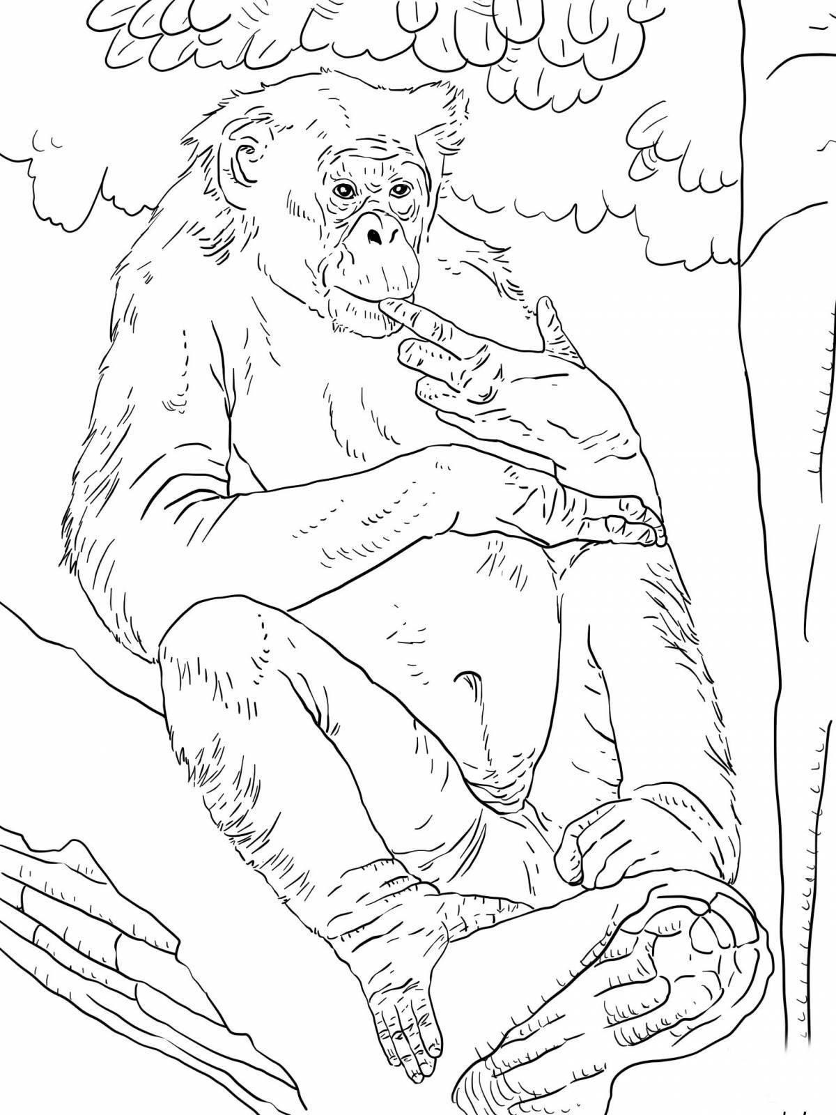 Раскраска бонобо