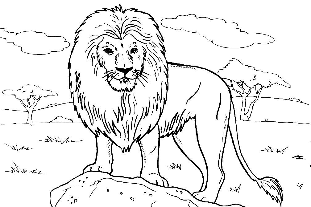 Раскраска lion
