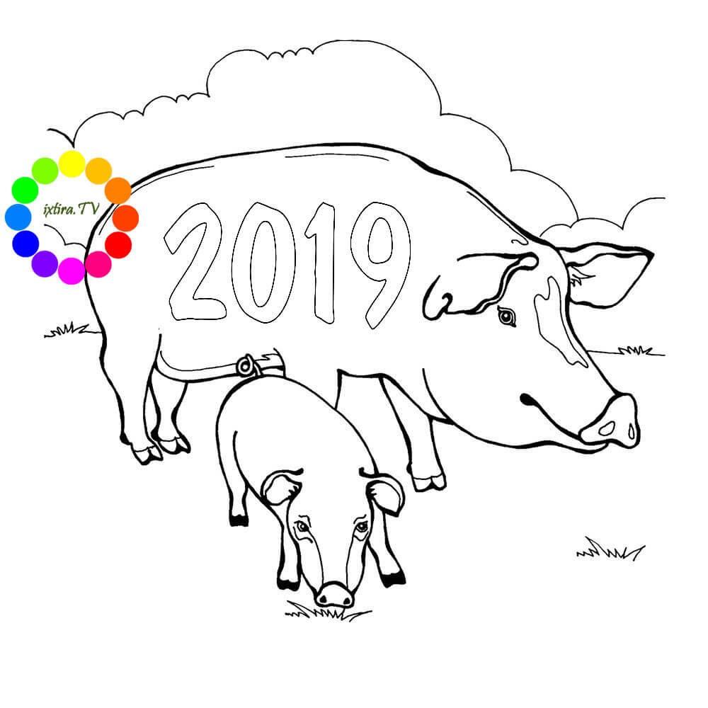 Раскраска свинья с поросёнком 2019