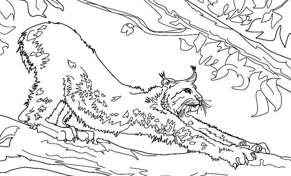 Раскраска рысь на дереве