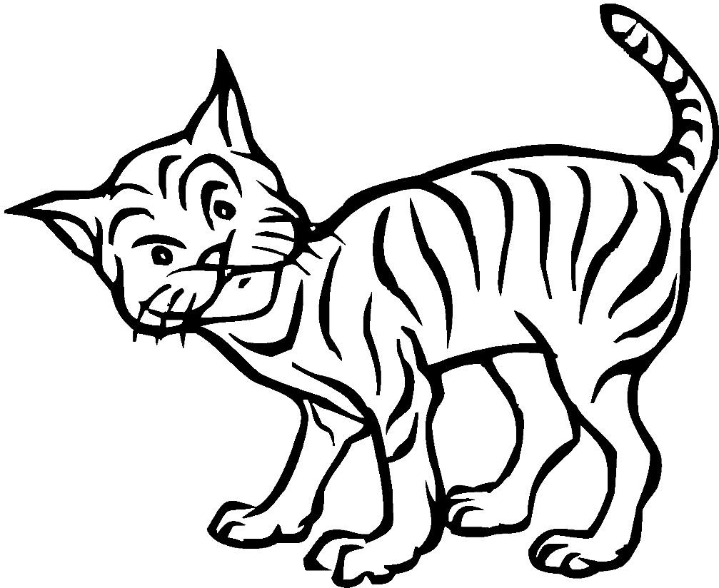 Раскраска lynx