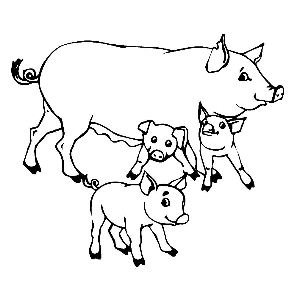 Раскраска свинья с поросятами