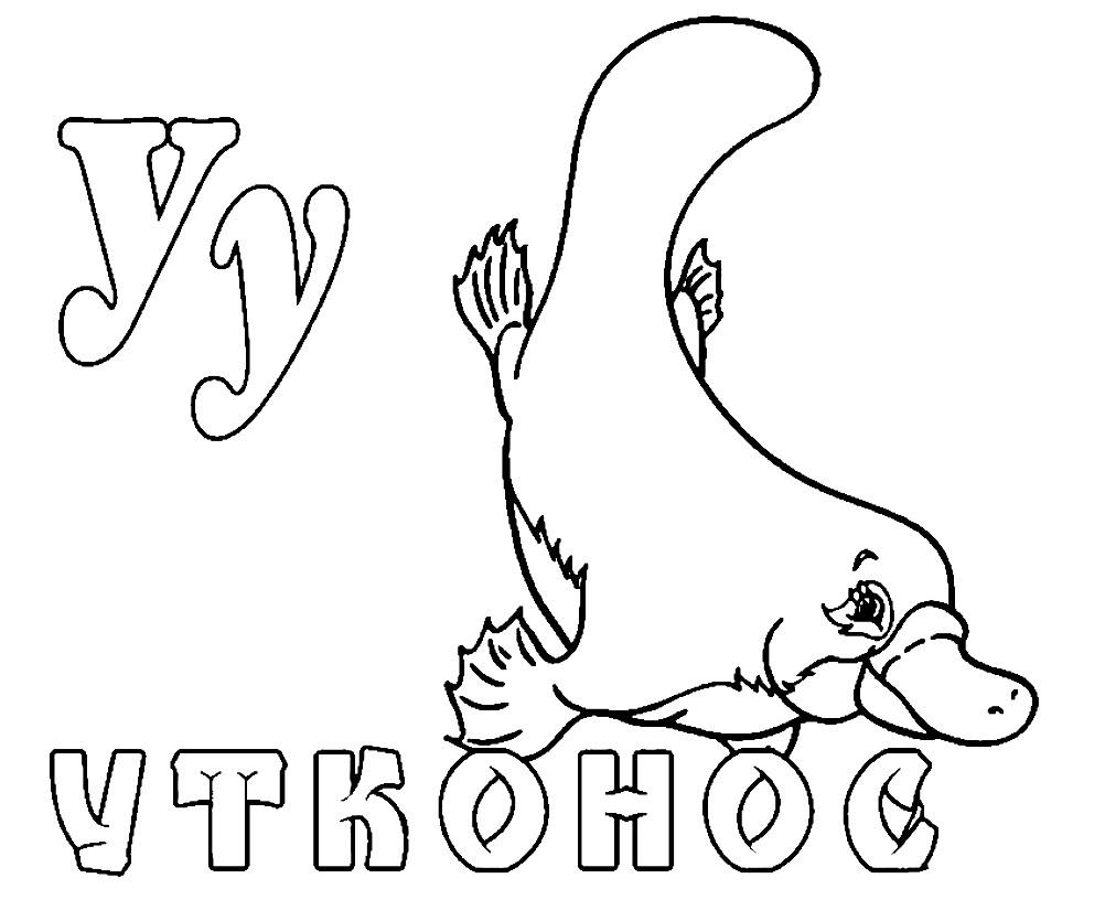 Раскраска platypus