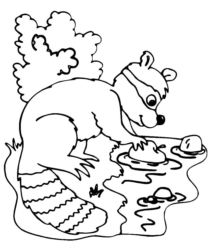 ЕНОТ   Раскраски для детей распечатать бесплатно в формате А4