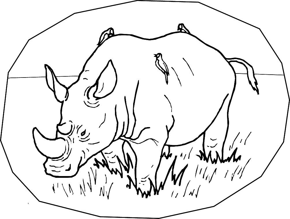 Раскраска Африканский носорог