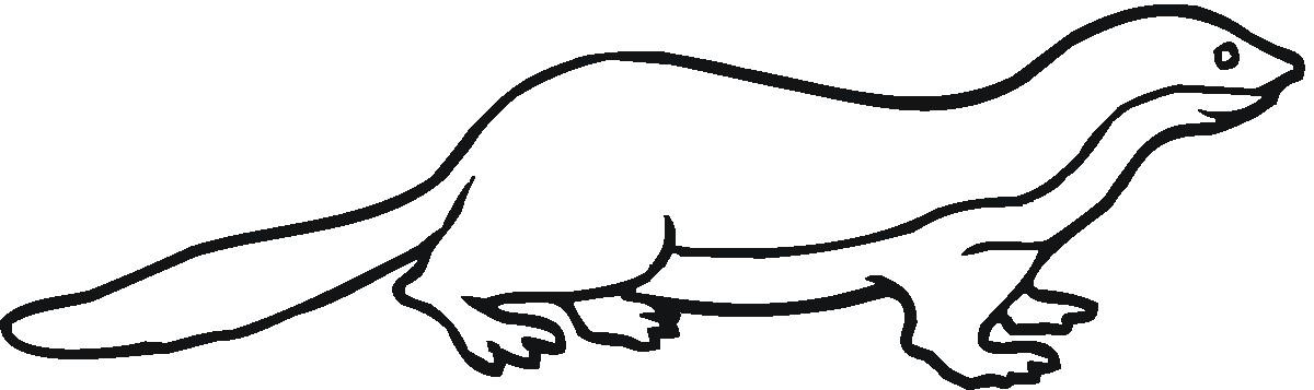 Раскраска ратель-медоед