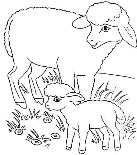 Раскраска овечка и ягненок