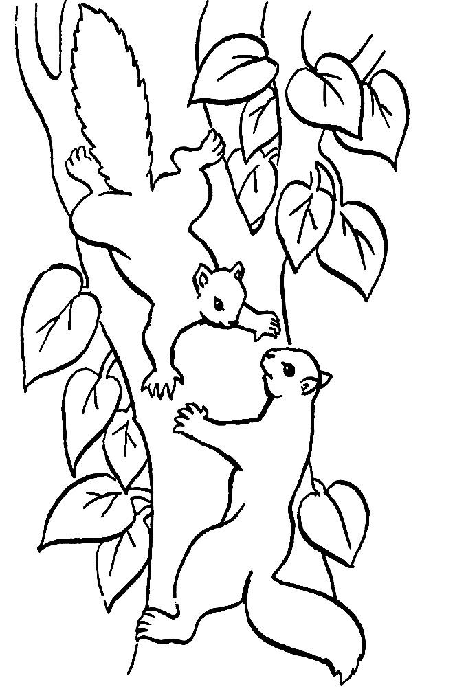 Раскраска белки на дереве